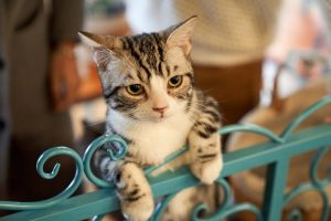9 Ways You Can Extend Your FIV-Positive Cat's 9 Lives