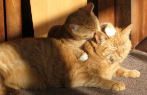 5 Reasons Why FIV Isn't a Death Sentence for Cats
