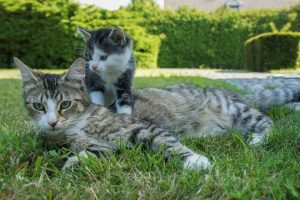 Your FIV-Positive Kitten Probably Doesn't Have FIV