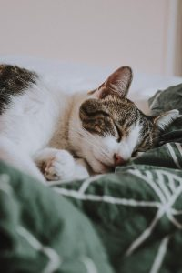 How to Make Your FIV Cat Feel More Comfortable