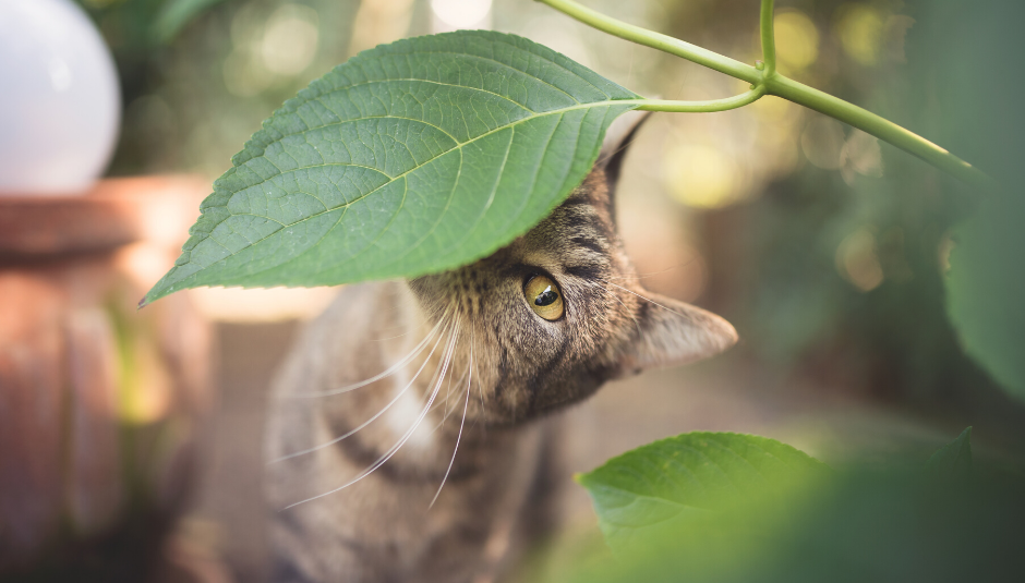 How to Build the Perfect Outdoor Enclosure (And Why Your Indoor-Only FIV Cat Needs You To)