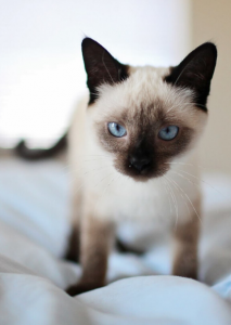 How to Deal with Feline Stomatitis in FIV Cats