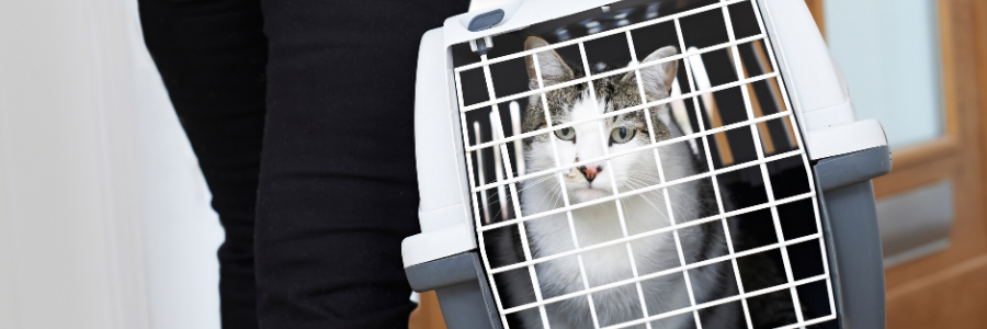 5 Things You Need to Know Before Adopting an FIV Cat