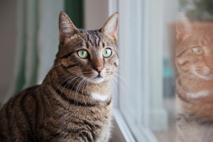 Feline Foamy Virus: What Is It and Why Does It Cause Arthritis in FIV Cats?
